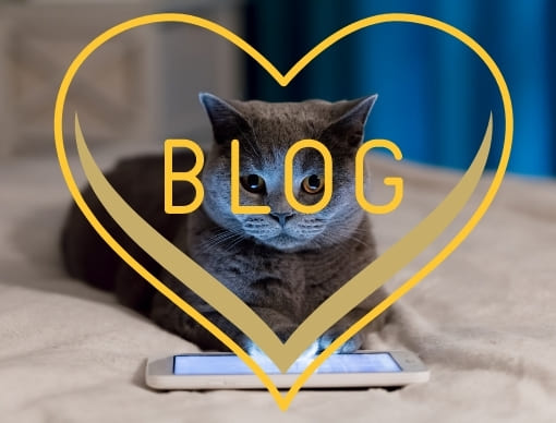 Britisch Kurzhaar Katzen Blog