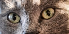 Pflege für Katzenaugen. Katzenpflege